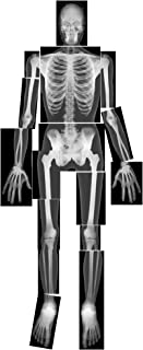 Best human x ray Reviews