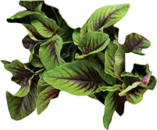 Amaranth Seeds - Red Green Leaf - Edible Healthy Open Pollinated - 2,000 Seeds