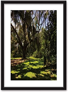 Actorstion Spanish Moss Hanging from Tree in South Carolina Low Country Framed Wall Art,057348 Black Picture Frames White Matting,16''x20''
