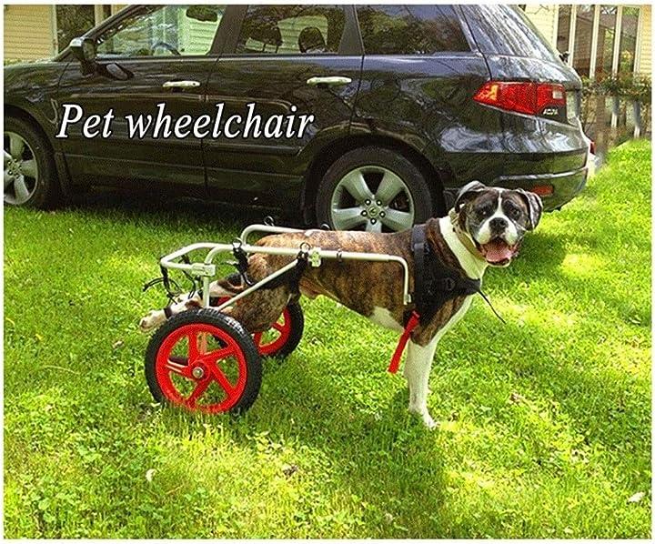 Sedia a rotelle per cane xl o xxl wyn B07SYNSZSF