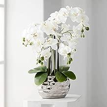 Dahlia Studios White Phalaenopsis 23