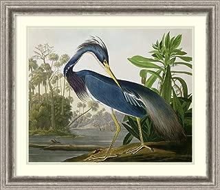 Framed Wall Art Print Louisiana Heron, from 'Birds of America', Engraved by Robert Havell, 1834 by John James Audubon 26.75 x 23.25