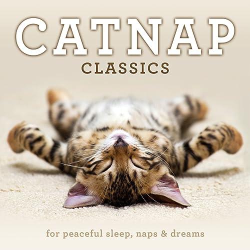 Image result for catnap
