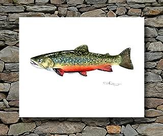 Brook Trout Watercolor Art Print By Artist DJ Rogers