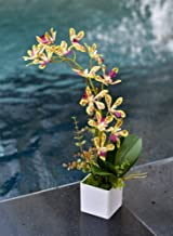 YATAI Artificial Phalaenopsis Orchid Flowers Leaves Branches Artificial Plants Fake Flowers for Home Office Garden Decoration – Silk Flowers Plastic Pot with Moss Grass Arrangement (Pink Yellow)