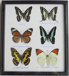 GABUR Real 6 Mix Butterflies Set Collection Gifts Taxidermy Display in Frame, 9.85 x 8.65 x 0.98 Inches, Black