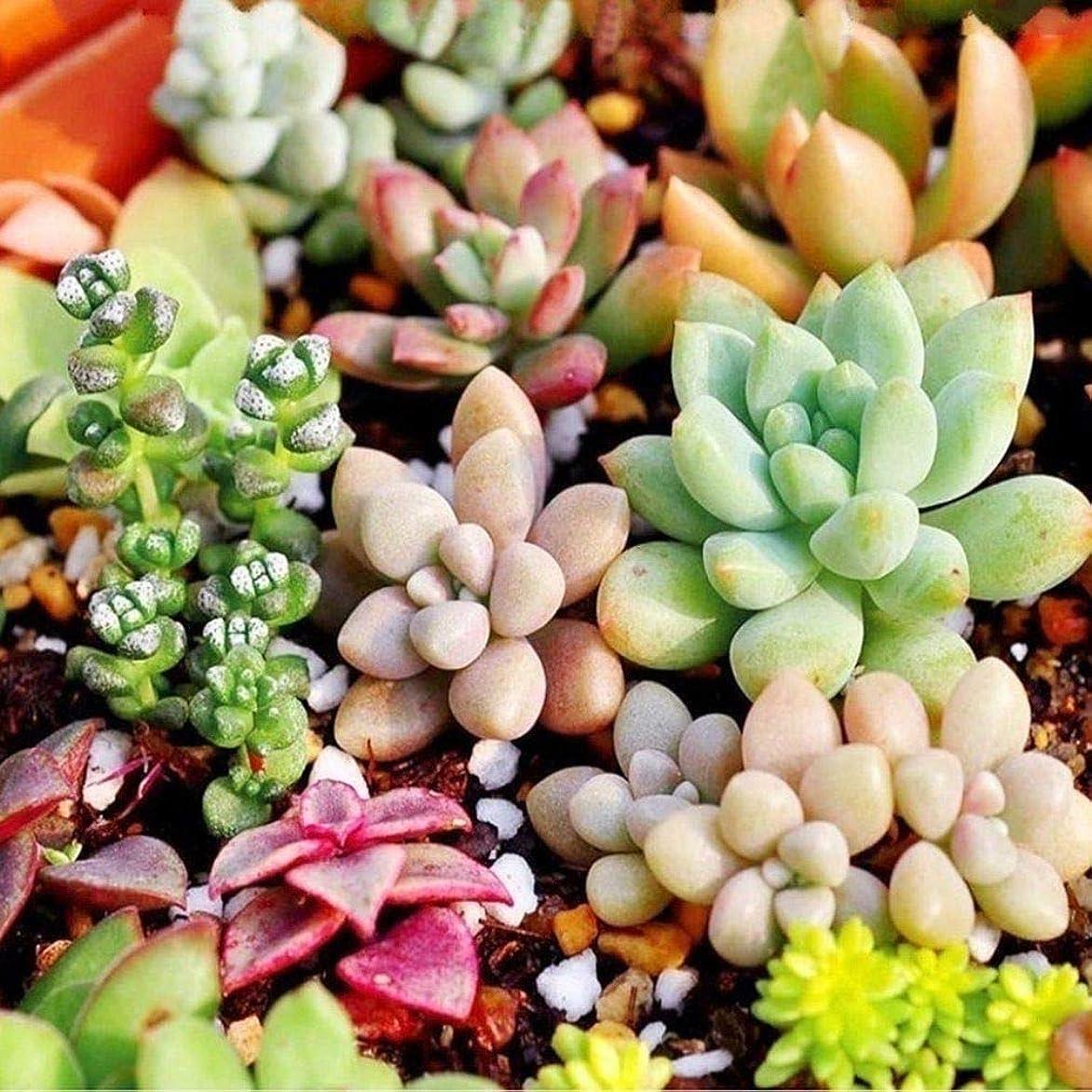 汚染する認証免疫100PCS:_CuteSeedss種子ホームヤードガーデンSeedssデコレーション盆栽種子