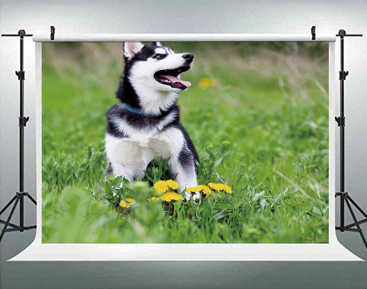 ALUONI 5x3ft Alaskan Malamute,Happy Doggy in Blossoming Spring Field with Singing Party Backdrop Photography Background Baby Adult Abstract Banner Cake Table Decoration Photo Booth AM002733
