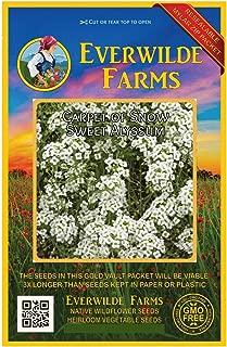 Everwilde Farms - 2000 Carpet of Snow Sweet Alyssum Wildflower Seeds - Gold Vault Jumbo Seed Packet