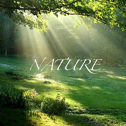 Nature - Wake Up Sound, Weckerton, Sonnerie Du Réveil ...