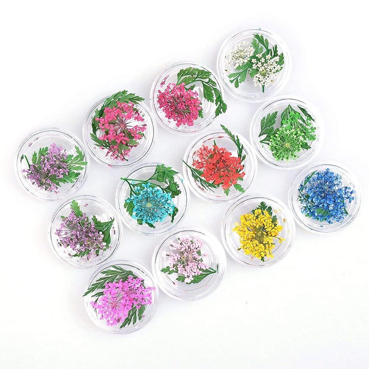 各起きる眠る押し花 ドライフラワー 葉 3Dネイル レジンデコレーション 12種 色
