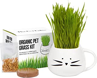 Organic Cat Grass Growing kit with Organic Seed Mix, Organic Soil and Cat Planter...