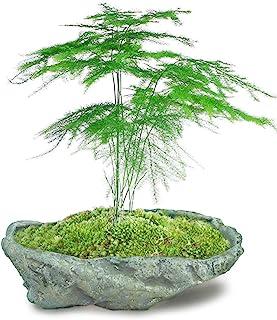Dahlia Stone Like Handmade Concrete Succulent Planter/Plant Pot/Flower Pot/Bonsai Pot, 9