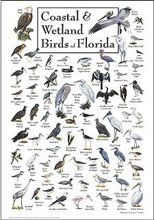 florida bird prints