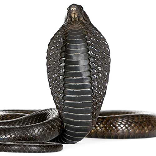 Guess The Snake FREE