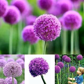 40 Pcs Allium Seeds Purple Giant Giganteum Onion Flower Planting Garden Decor