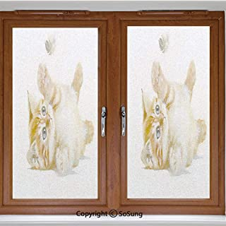 24x24 inch Decorative Window Privacy Film,Cute Cat Playing with Feather in Watercolors Hand Drawn Illustration Art Frosted Stained Window Clings Static Cling for Home Bedroom Office