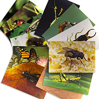 Stages Learning Materials Insect Posters for Classroom Décor, Bulletin Boards, 14 Large Picture Cards