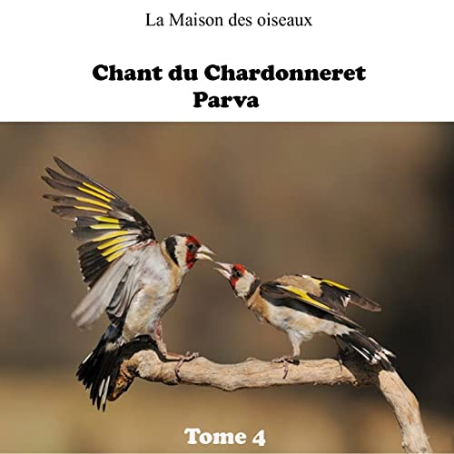 chant chardonneret elegant mp3