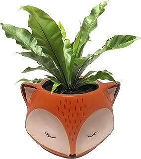 Streamline Ceramic Fox Flower Planter Pot