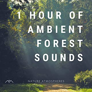ambient forest sounds