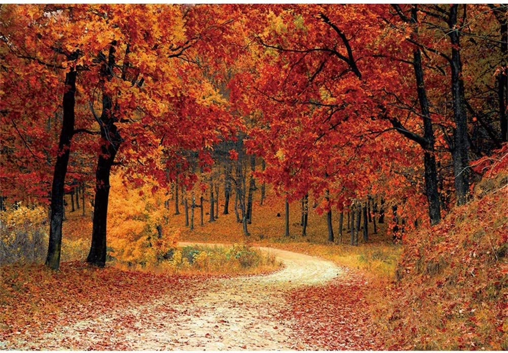 Leyiyi 12x10ft Autumn Forest Backdrop Red Maple Trees Mountain Road Deciduous Landscape Thanksgiving Photography Background Fall Natural Scenery Wedding Children Adult Portraits Photo Studio Prop