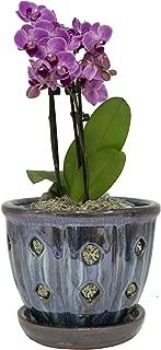 TRENDSPOT 5in Orchid Indoor Planter, 5 inch, Blue