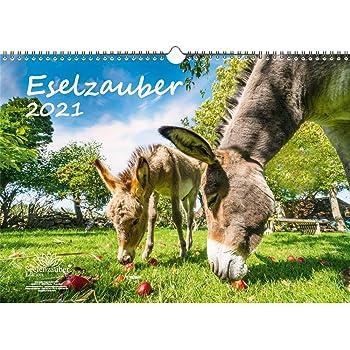 Eselzauber Din A3 Kalender Fur 2021 Esel Seelenzauber Amazon De Burobedarf Schreibwaren