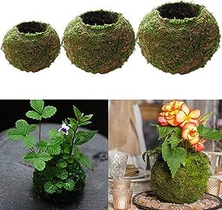 HOT- Flower Pots & Planters - 3X Natural Dry Moss Ball Bonsai Green Sphagnum Moss Planting Ball Flowerpot - by Office Decoration - 1 PCs