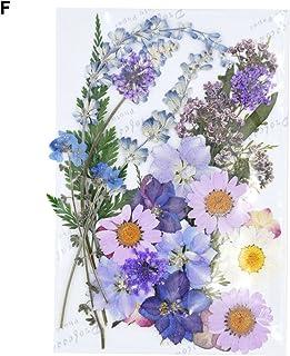 lzndeal 40pcs Prensa Seca Flores Plantas Colgantes de Resina Collar Joyas Hacer Artesanía Bricolaje Accesorios