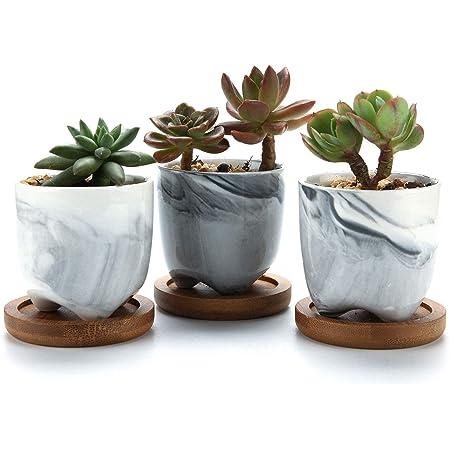 T4U 6CM Pot de Succulent en Céramique Gris avec Plateau en Bambou Lot de 3, Cactus Plante Planteur Cache Pot Jardinière Contenant Décoration de Maison Bureau Cadeau pour Anniversaire Mariage