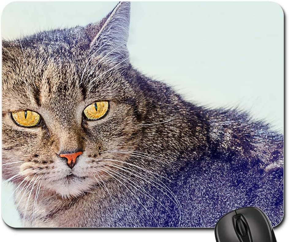 Mouse Pad - Cat Animals Domestic Watch Max 71% Store OFF Felines Pet Kitten 1