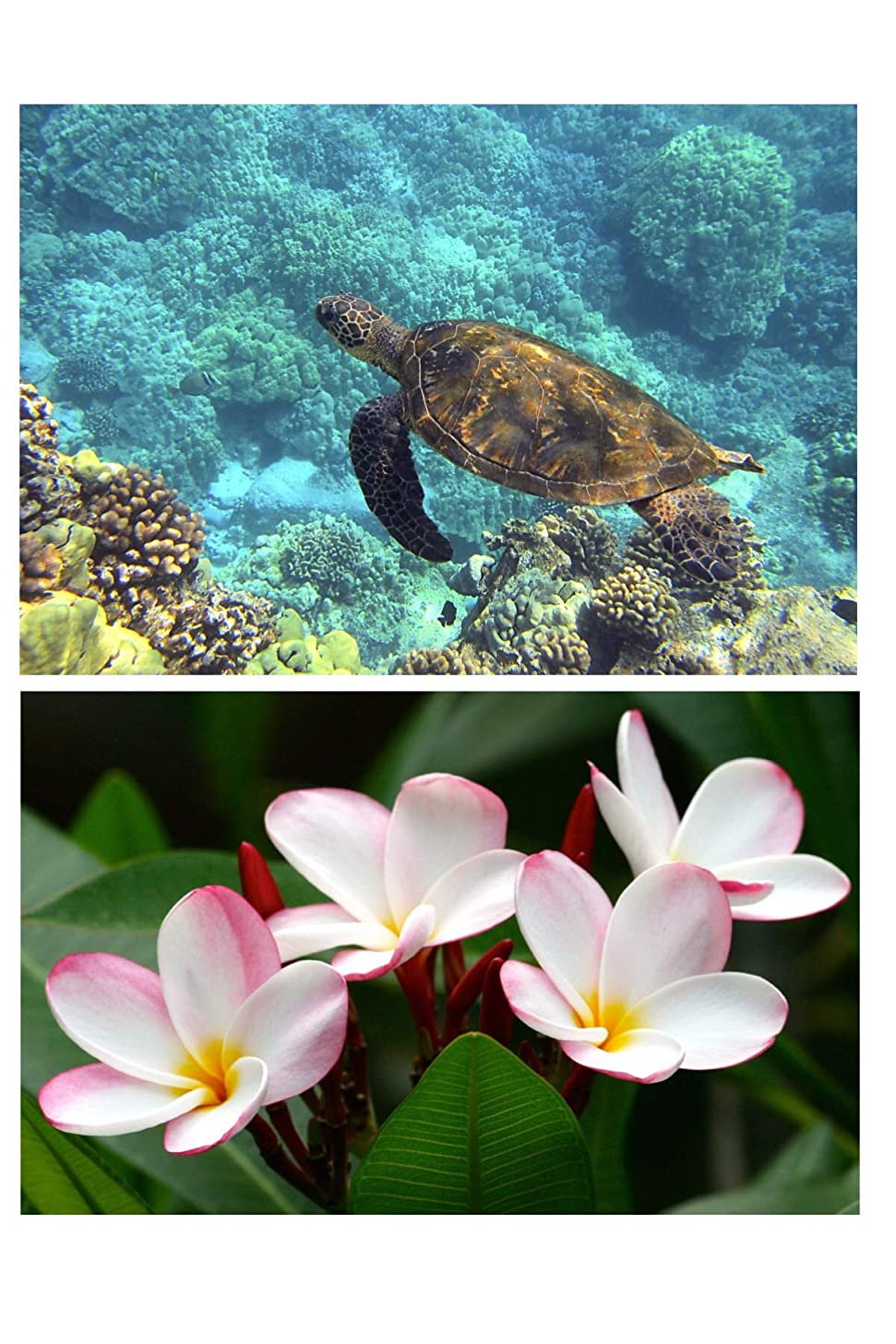 HiSupply 5D Diamond Art Painting Kit Hawaiian Plumeria Flower and Turtle Honu - Set of 2 kits