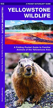 Yellowstone Wildlife: An Introduction to Familiar Species of Yellowstone Area