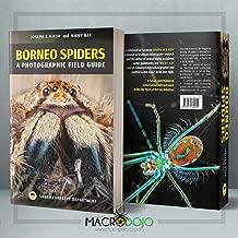 Borneo Spiders A Photographic Field Guide