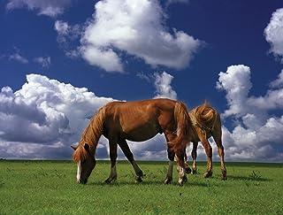 JP لندن pmur2201قش ّ ر ْ والصق ْ قابلة للإزالة ملصق حائط من الفينيل ملصق جداري ، Horses على سادة grazing farmland Wild ، ...