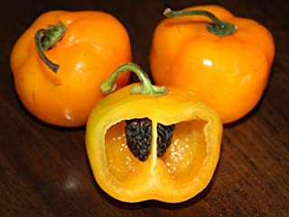 Manzano pepper 20 seeds, yellow, orange or red, choice listing