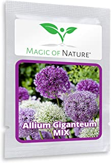 Giant Onion (Allium giganteum) Mix - Purple and White - 2 x 30 Seeds/Pack - Onion - Frost-Resistant - Giant Onion