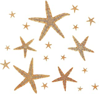 Kicko Natural Starfish Assortment 0.5 to 3 Inches - Beige, Tan and Cream - Arts and Crafts Projects, Party Decorations, Invitations, Wrapping, Beach Wedding and Parties - 30 Pack