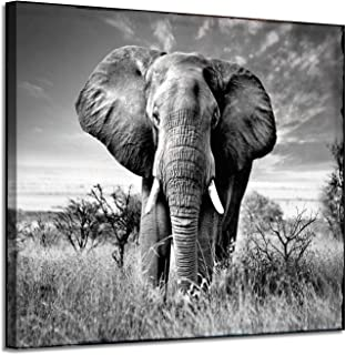 Best elephant high resolution pictures Reviews
