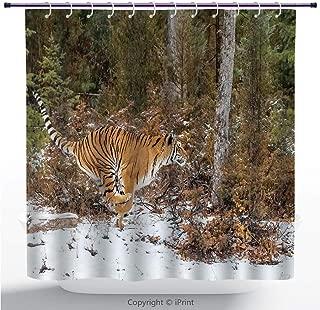 Soft Fabric Shower Curtain/Safari Decor,Bengal Tiger in Snowy Jungle Hunting and Cruising for Prey Furry Majestic Mammal Photo,Orange Green/Fabric Bathroom Decor Set with Hooks