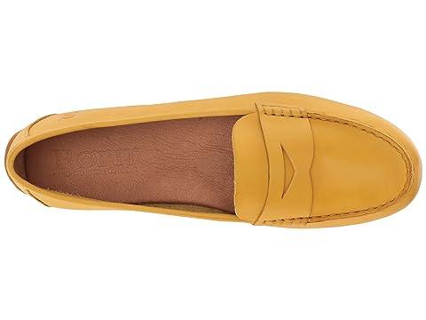 Nacido Grano Completo Girasol Grano Amarillo SZwqZg