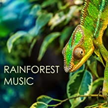 Rainforest Music - The Very Best Collection of Nature's Lullabies, Soothing Soundscapes for Deep Sleep