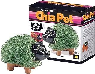 Chia Pet Pig - 1 Each