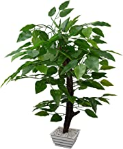 Fancy Mart Artificial Ficus Tree with White Square Pot (60 cms)