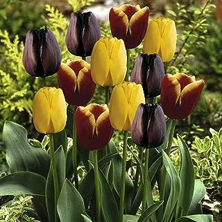 Van Zyverden Tulips Gavota Blend Set of 15 bulbs