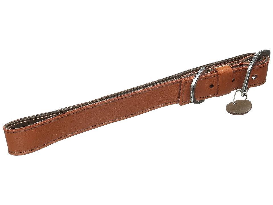 Ruffwear Timberline Collar (Canyonland Orange) Dog Collar