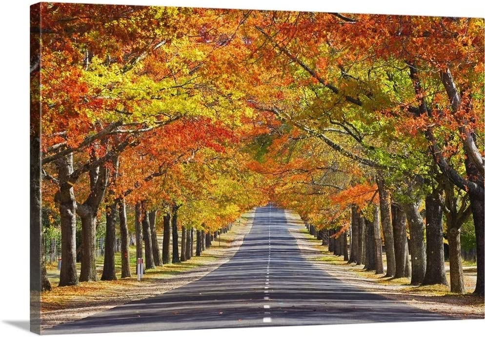 GREATBIGCANVAS Memorial Avenue in Large discharge sale Autumn Tulsa Mall Wall Art Mount Canvas