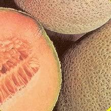 Fruit Seeds - 50 Seeds of Planters Jumbo Melon Seeds