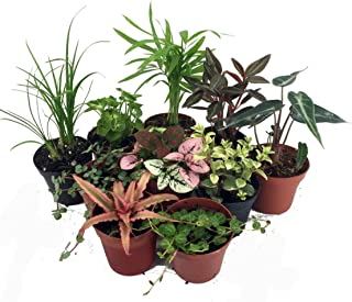 Terrarium & Fairy Garden Plants - 10 Plants in 2